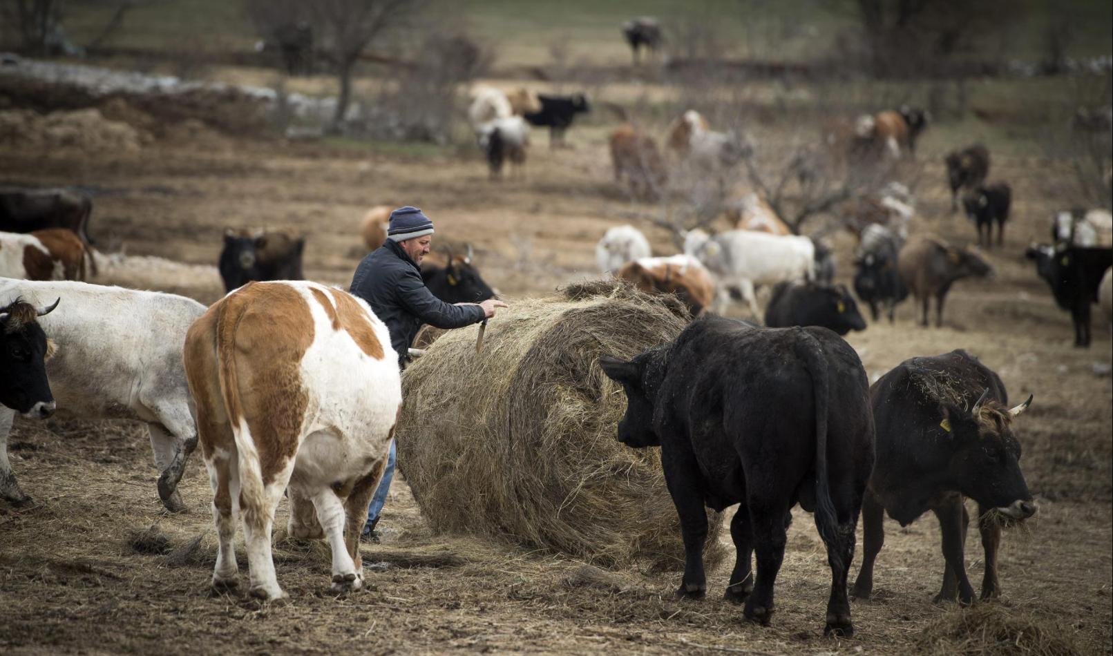 S ovim stadom nije iskorišteno ni deset posto kapaciteta Kamešnice / Foto: Slobodna Dalmacija/Ante Čizmić/Cropix